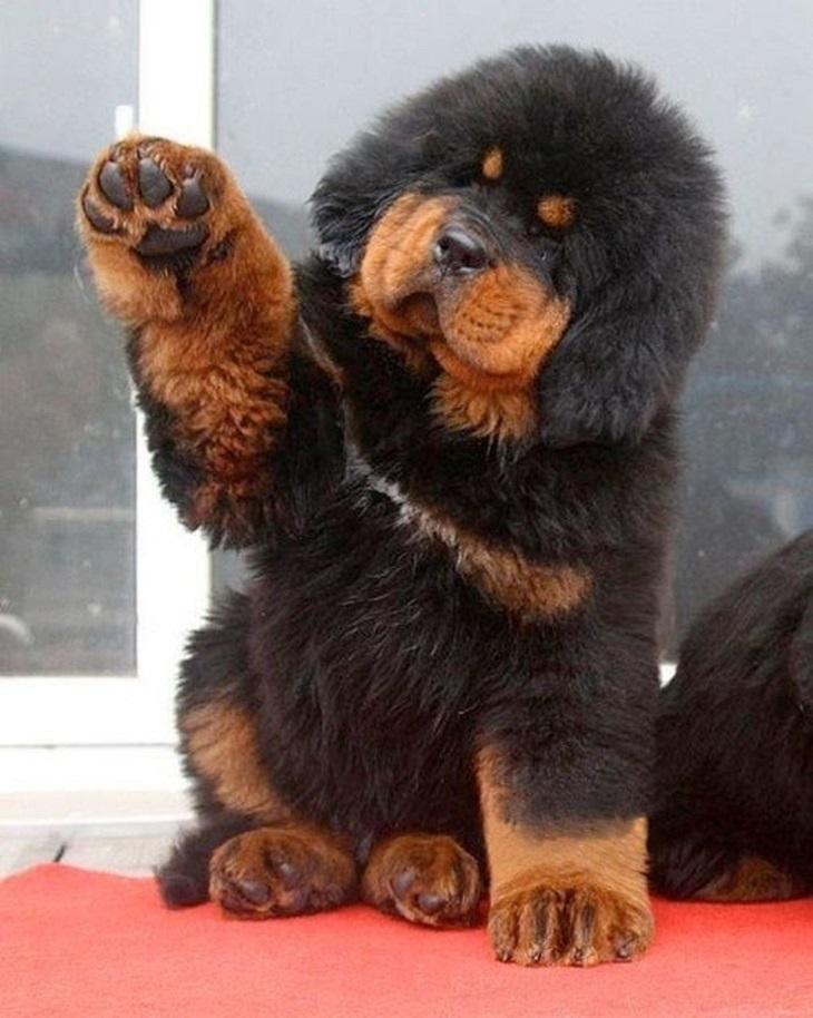 חיות שמנמנות ומתוקות:כלב מתוק מרים את כף רגלו