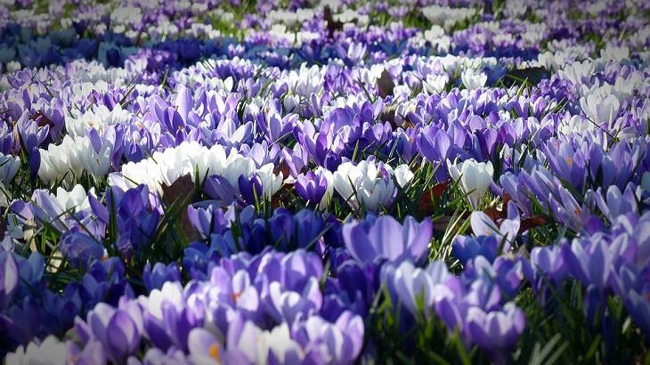 אש והקרבה - שיר מעורר השראה: גינת פרחים