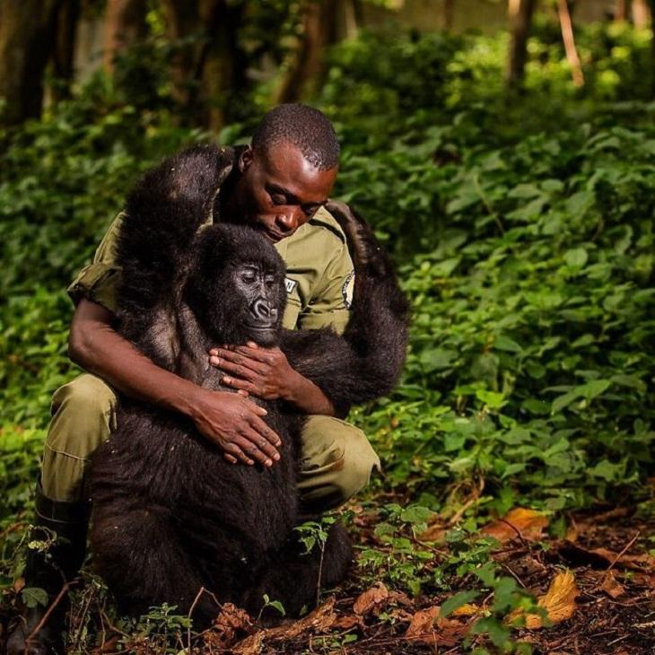 תמונות מתחרות אינסטגרם של נשיונל גאוגרפיק: שומר יערות מחבק קוף