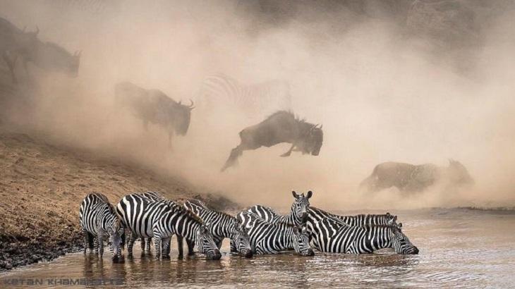 תמונות מתחרות אינסטגרם של נשיונל גאוגרפיק: זברות במים