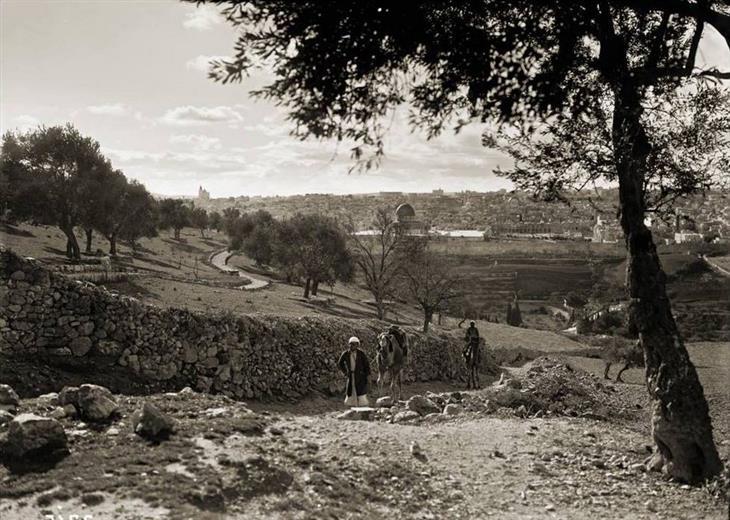 תמונות מהתקופה המנדטורית: תמונה פסטורלית של הר הזיתים עם ירושלים ברקע, 1920.