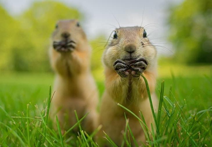 חיות בר מצחיקות: מכרסמים חמודים