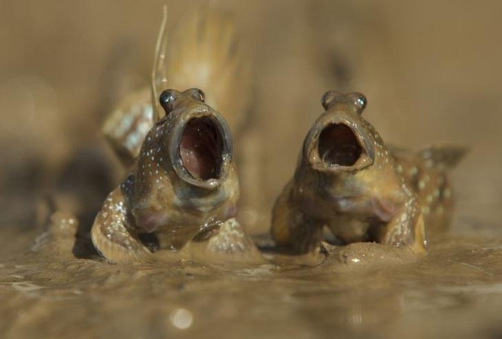 חיות בר מצחיקות: קרפדות מזמרות