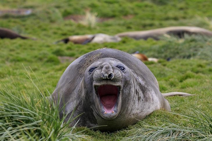 חיות בר מצחיקות: כלב ים מחייך בהתלהבות