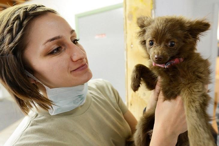 דברים שווטרינרים ממליצים: אישה מחזיקה גור כלבים