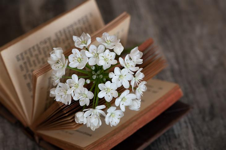 שיעורים לחיים מתוך הספר רעיונות: ספר שבתוכו זר פרחים