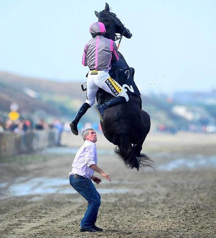 תמונות מצחיקות ברגע הנכון: סוס רכוב מזנק באוויר והרוכב שלו נופל ממנו
