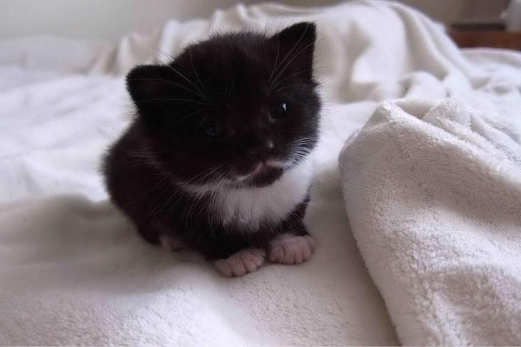 גורי חתולים חמודים: גור חתולים יושב על מיטה