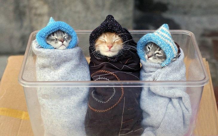 גורי חתולים חמודים: שלושה גורי חתולים עטופים במגבות