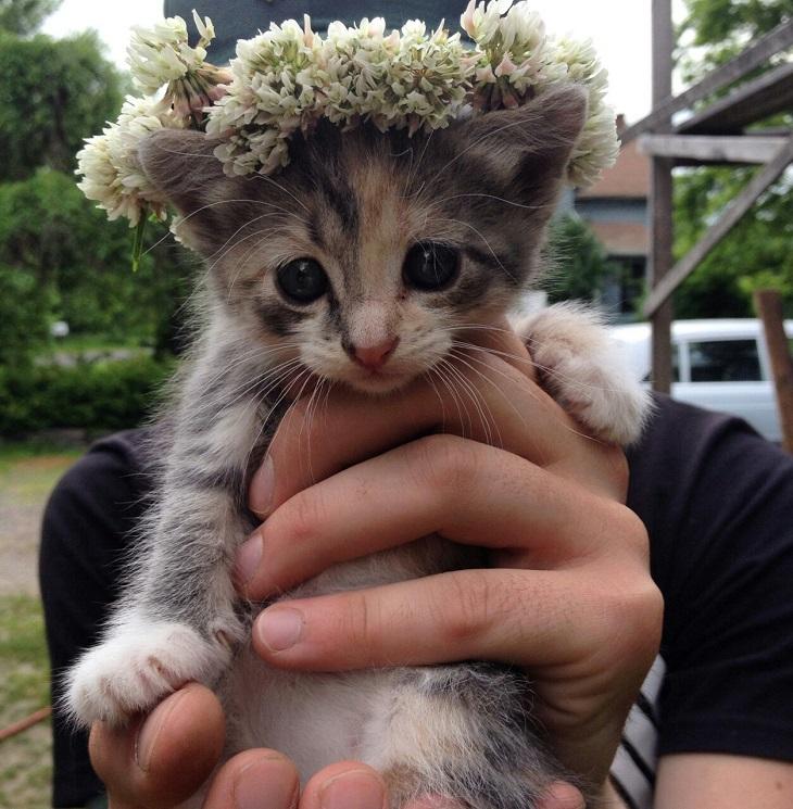 גורי חתולים חמודים: גור חתולים עם זר פרחים לראשו