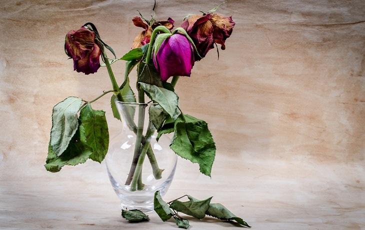 סימנים למניפולציות במערכות יחסים ומה ניתן לעשות: פרח נובל
