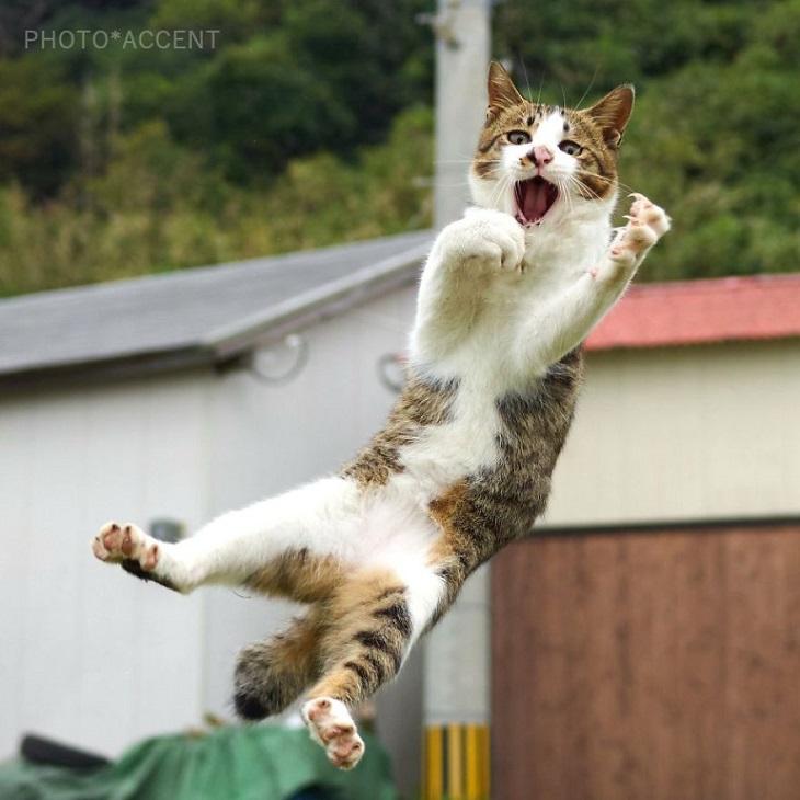 חתולים שעוסקים באמנויות לחימה