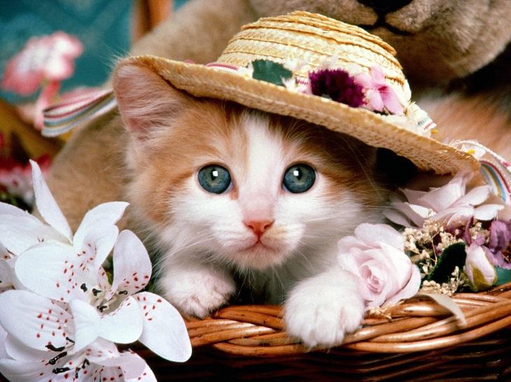 חיות חמודות בכובעים: גור חתולים מקסים עם כובע פרחוני