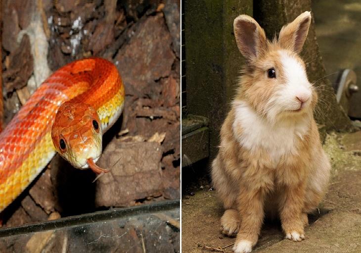 הבדיחה על הארנב והנחש: נחש וארנב