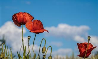 מצא את ההבדלים: פרחים