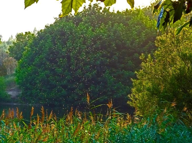 פתרונות להרחקת יתושים: יתושים מתעופפים בשדה פתוח