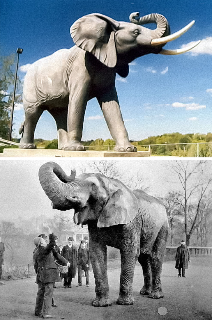 פסלים עם סיפורים: פסל ג'מבו הפיל לצד תמונה מקורית של בעל החיים