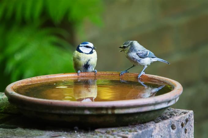 בחן את עצמך: ציפורים על אמבטיית מים
