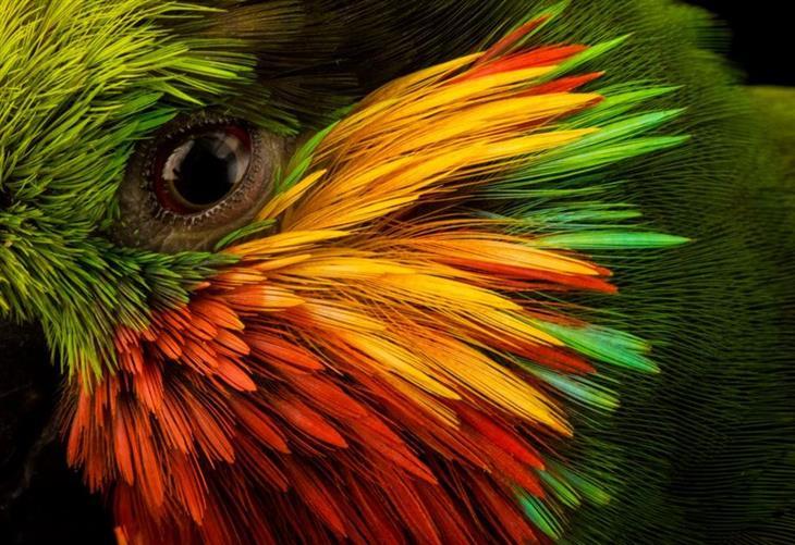 תמונות לשימור בעלי חיים: אדוארד פיג פארוט