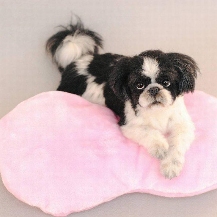 חיות צמר מציאותיות: כלב שוכב על כרית