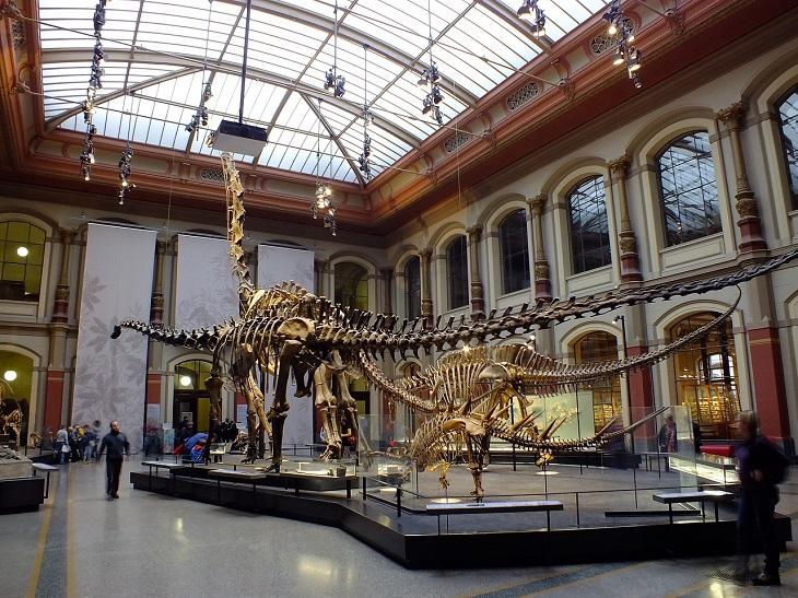 מוזיאונים בברלין: תצוגת דינוזאורים במוזיאון הטבע