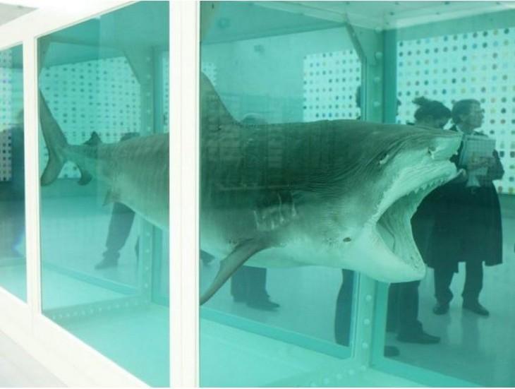 פריטים יקרים: כריש מפוחלץ