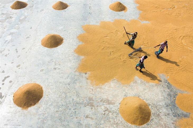 תחרות צילום האוכל פינק ליידי 2019: אנשים קוצרים אורז ואוספים אותו בערימות