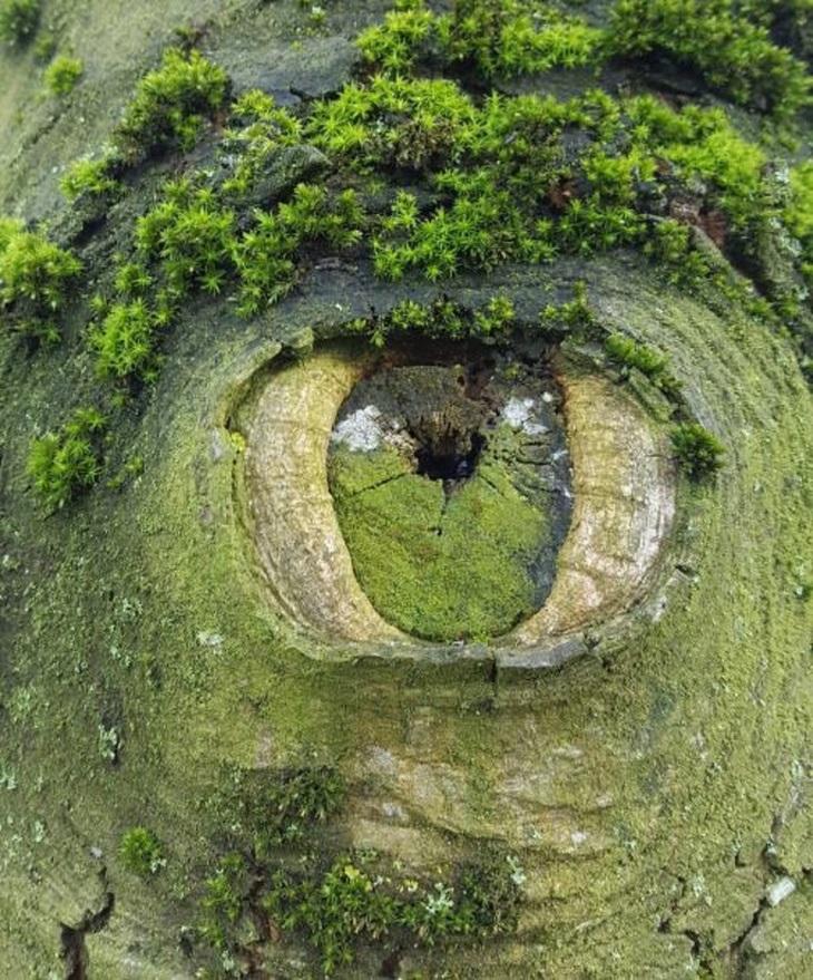 תמונות טבע כובשות עין: גזע עץ