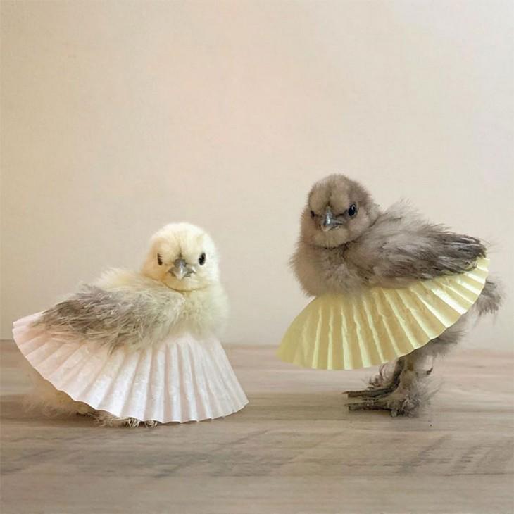 תרנגולות בחצאיות טוטו: שני אפרוחים בחצאיות טוטו