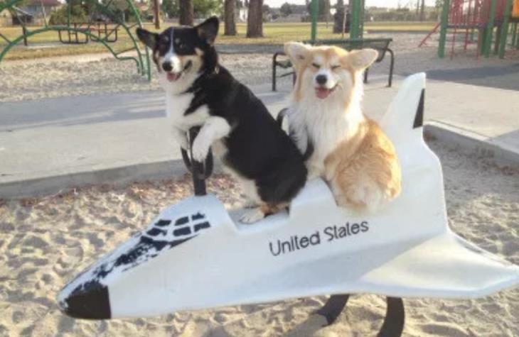 כלבים מתוקים: שני כלבים על מתקן של מטוס בגינה