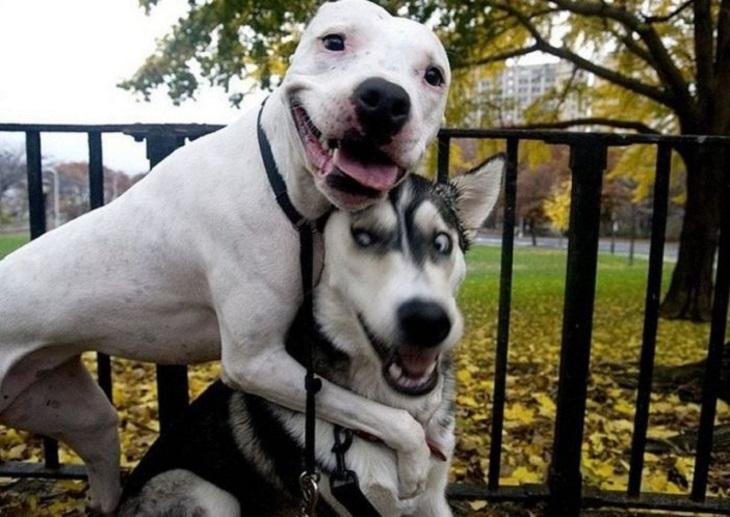 כלבים מתוקים: שני כלבים מצטלמים, כשאחד מחייך למצלמה והשני בהלם