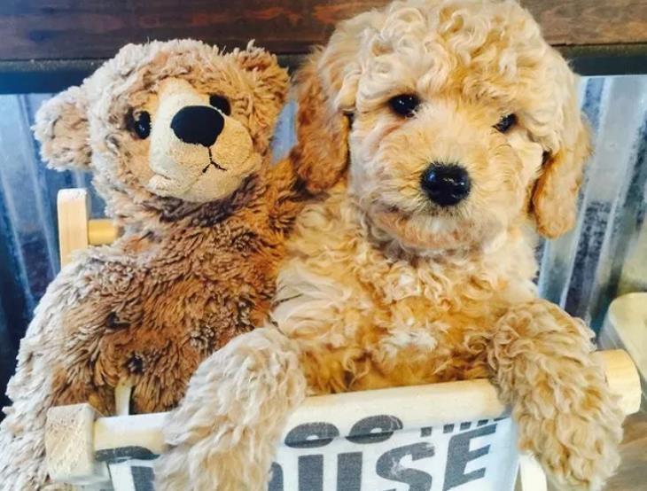 כלבים מתוקים: כלב ובובה של דוב בסל לאחסון בובות