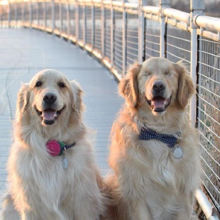 הכלב העיוור שיש לו כלבת נחייה: ג'ייק הכלב העיוור, וחברתו וכלבת הנחייה שלו הדי