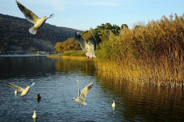 האזורים היפים ביותר בשווייץ: ציפורים מעל אגם ביאל
