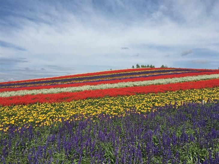 האזורים היפים של יפן: שדה צבעוני בהוקאידו