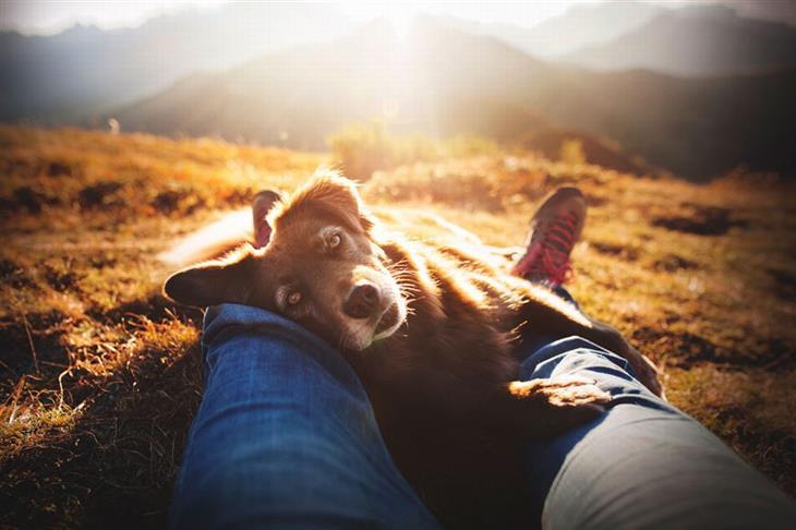 תחרות צילום כלבים: כלב נח על רגליים של אדם בטבע