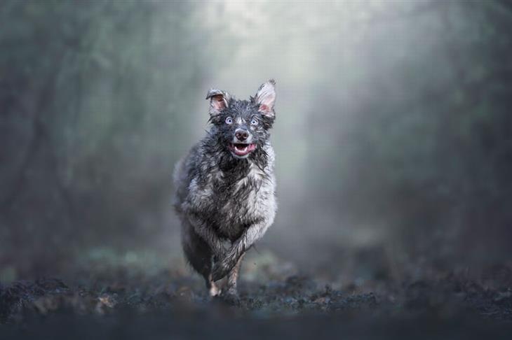 תחרות צילום כלבים: כלב מלוכלך מבוץ רץ