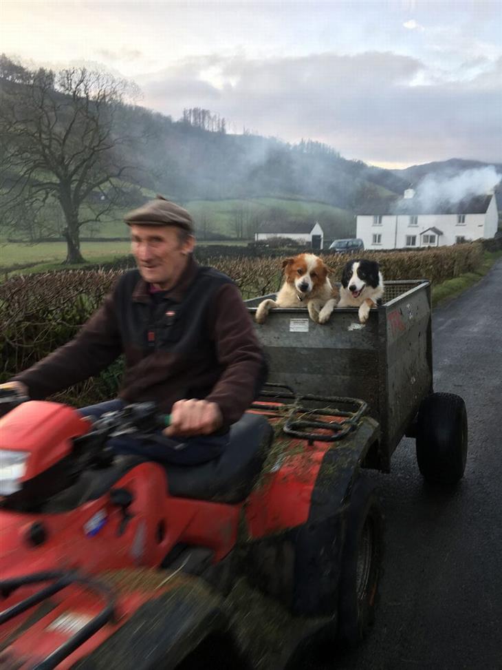 תחרות צילום כלבים: שני כלבים רכובים על גרר של טרקטורון