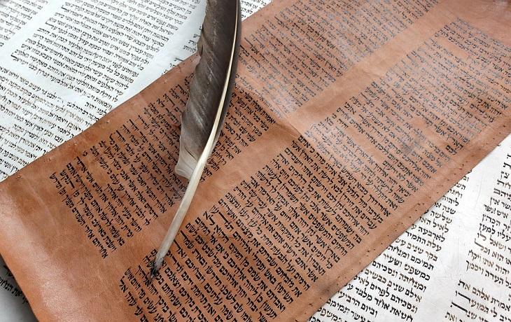 סיפורם של ספרי תורה שהשתמרו: נוצה מונחת על קלף עליו כתובים פסוקים מן התורה