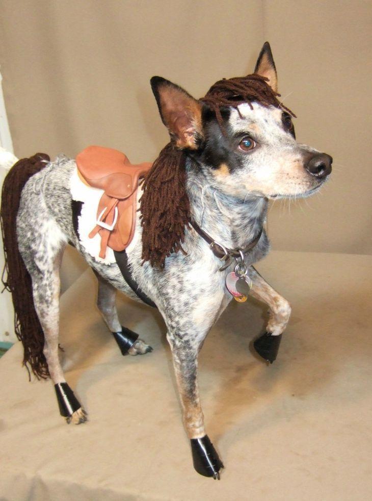 כלבים שובבים שמזכירים אנשים: כלב מחופש לסוס