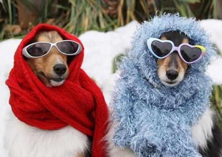 כלבים שובבים שמזכירים אנשים: שתי כלבות עם משקפי שמש וצעיף