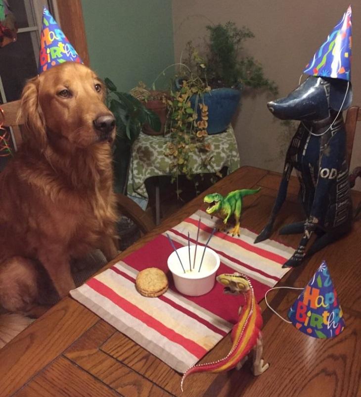 כלבים שובבים שמזכירים אנשים: כלב עם פרצוף עצוב וכובע יום-הולדת, ועל השולחן בובות ועוגה