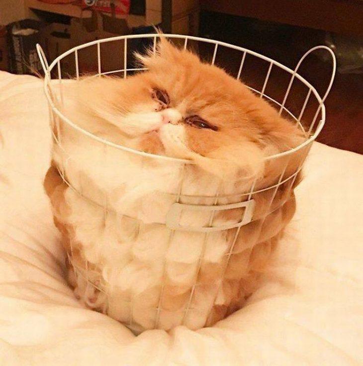 חיות חמודות שיגרמו לכם לשכוח מהצרות: חתול פרוותי מעוך בתוך סלסלה