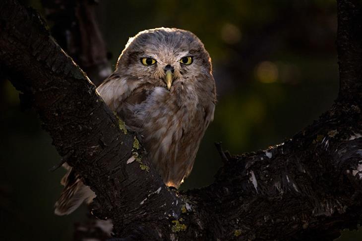 """תחרות """"צלם הציפורים של השנה 2019"""": כוס החרבות עומד על ענף עץ"""