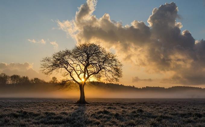 מבחן טריוויה ידע כללי: עץ בשקיעה