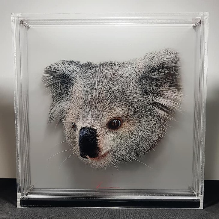 ציורי בעלי חיים בתלת מימד: ציור בתלת מימד של קואלה