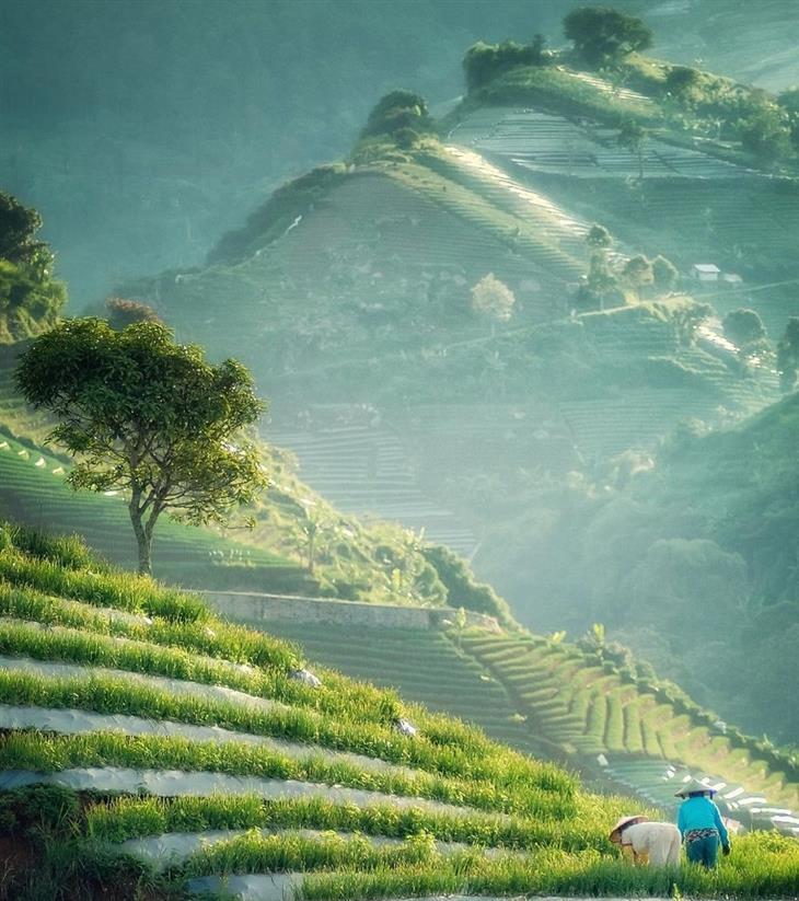 תמונות טבע מדהימות: חקלאים עובדים בשדות בשעות בוקר - אינדונזיה
