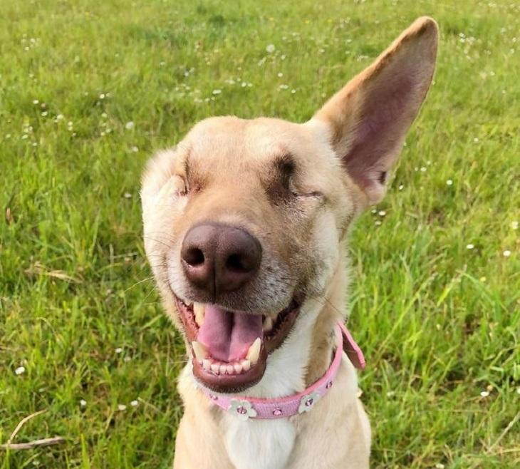 הכלבה מגי: יושבת על דשא ומחייכת