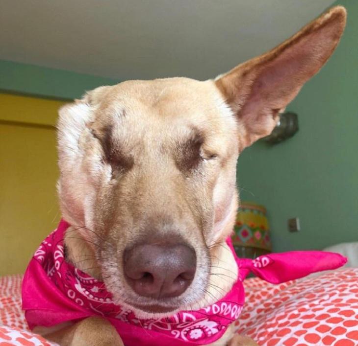 הכלבה מגי: יושבת על המיטה