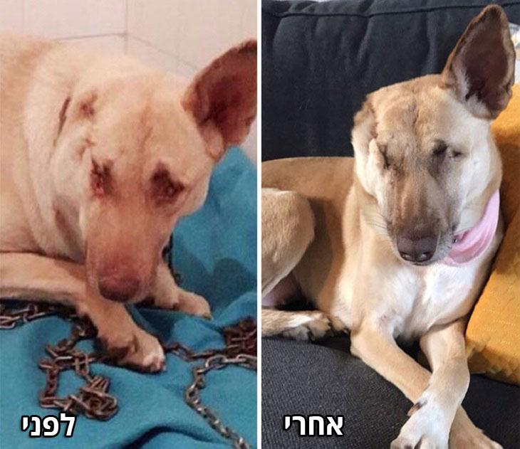 הכלבה מגי: לפני ואחרי הטיפולים